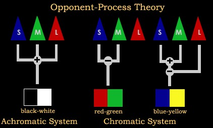 Opponent Process Theory Of Color Vision